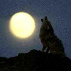 la-noche-de-luna-y-el-tarot1