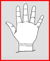 quiromancia-linea-del-brazalete